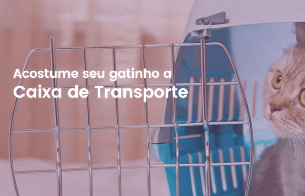 Acostume seu gatinho a caixa de transporte