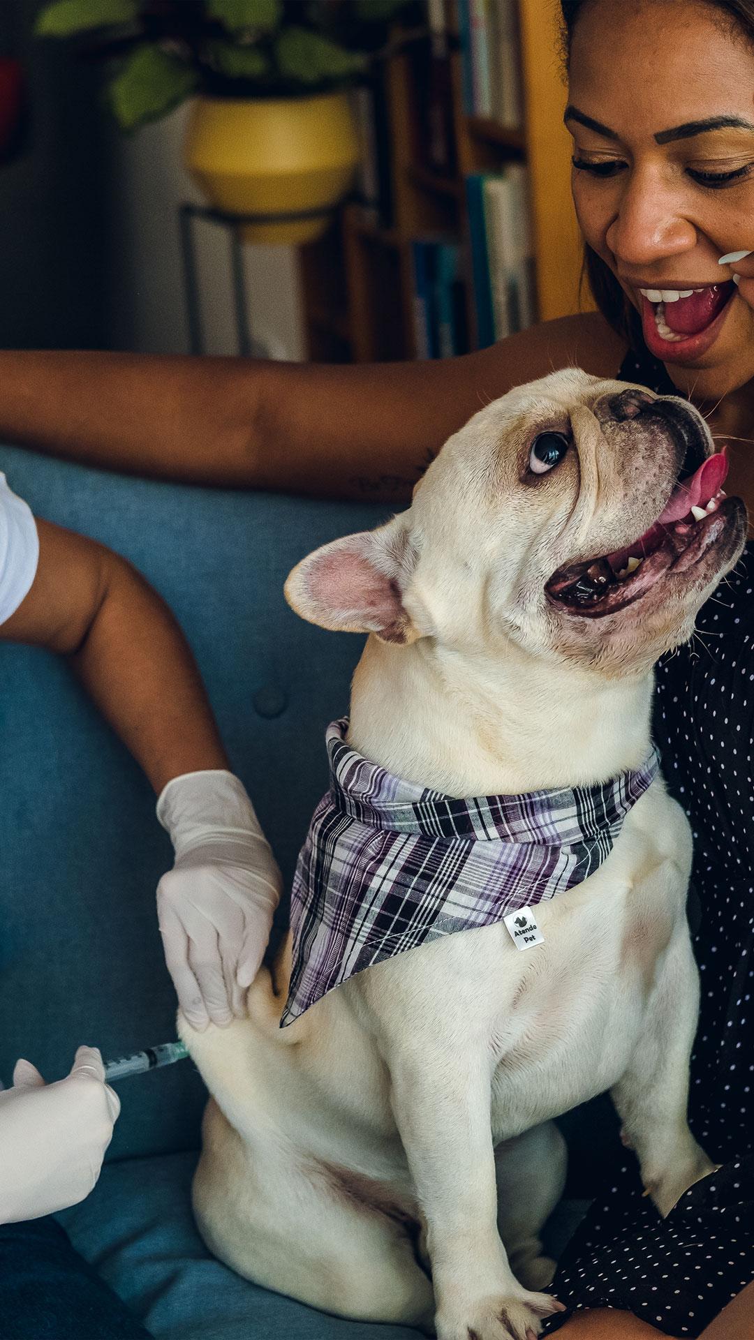 Vacina em pets - Atende Pet