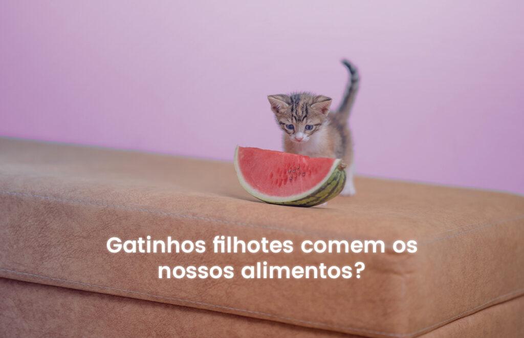 Gatos filhotes comem comida de humano