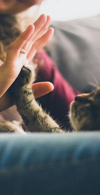 vacinas em gatos em domicilio no atende pet